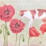 cat walks on the poppies.
